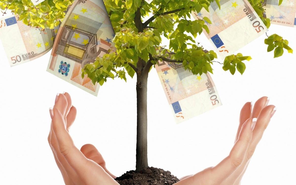 дерево с деньгами в руках